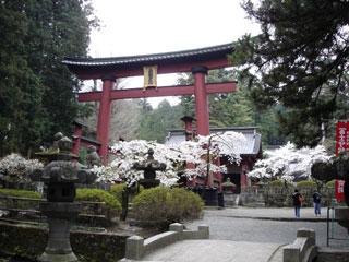 ▲赤鳥居と桜。まるで絵はがきのようでした。
